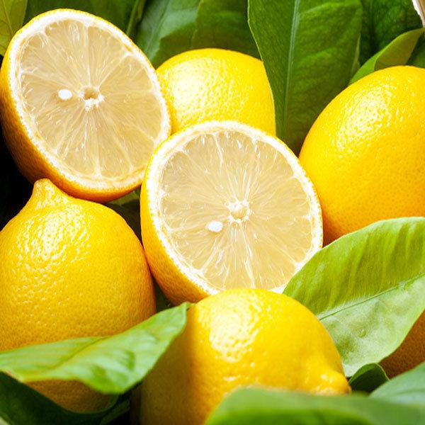 초이스 레몬1박스100알(소과/알당100g) 선키스트 옵션 상품이미지