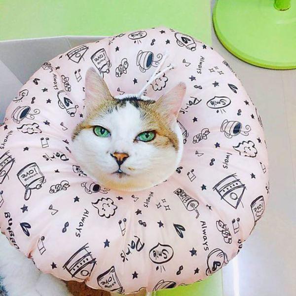 솜사탕 쿠션넥카라 L(대) 상품이미지