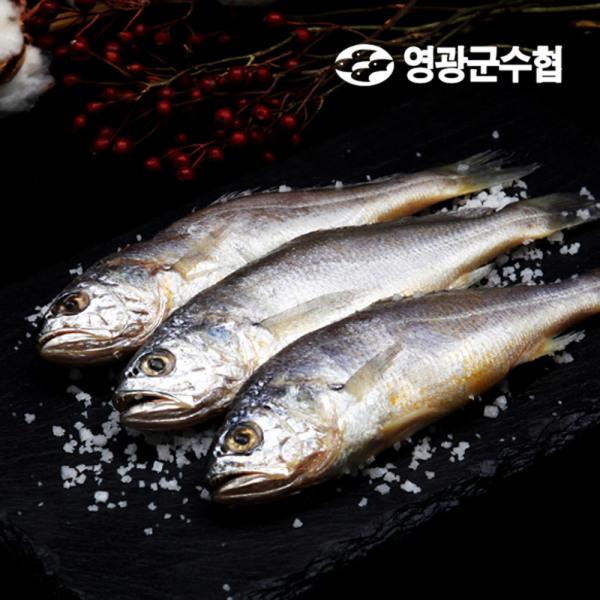 영광군수협 직배송 영광굴비 프리미엄 오가3호 2.1kg