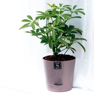 아침향기 기능성 에코화분 미세먼지제거 공기정화식물