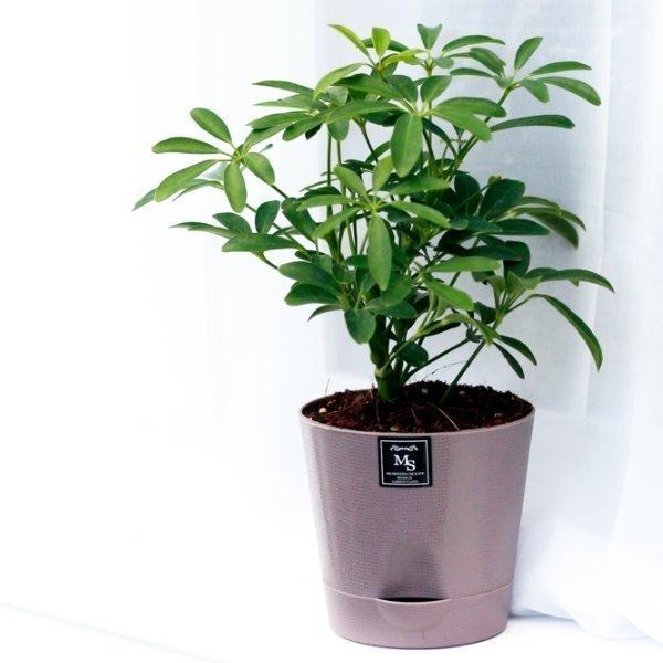 아침향기 기능성 에코화분 미세먼지제거 공기정화식물 상품이미지