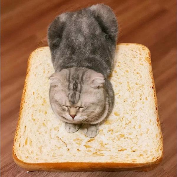 애견 강아지 고양이 식빵 쿠션 방석 매트 침대 60x60 상품이미지