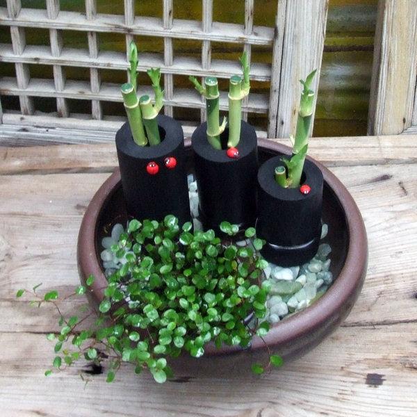 천연수반가습기모음 옹기 공기정화식물 개운죽 가습기 상품이미지