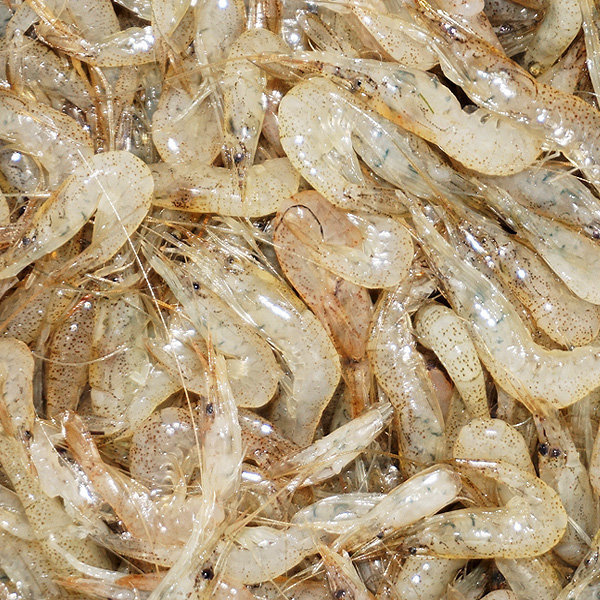 민물새우  국산 ( 김장용 / 육수용 ) 2kg 상품이미지