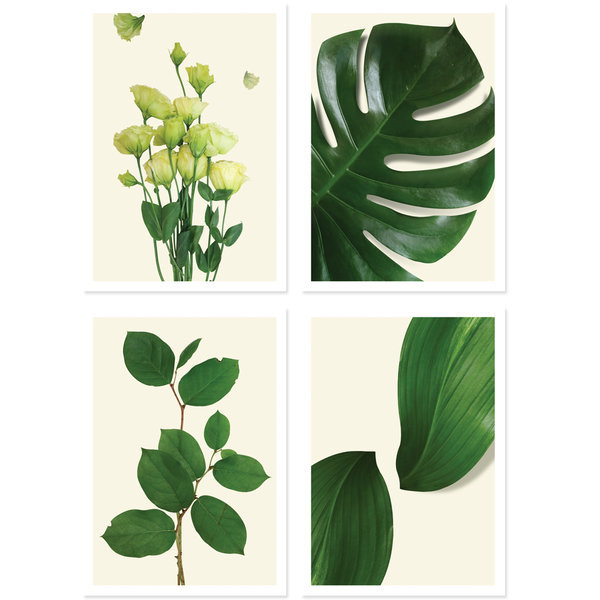 북유럽 인테리어 식물포스터B 1+1+1+1 상품이미지
