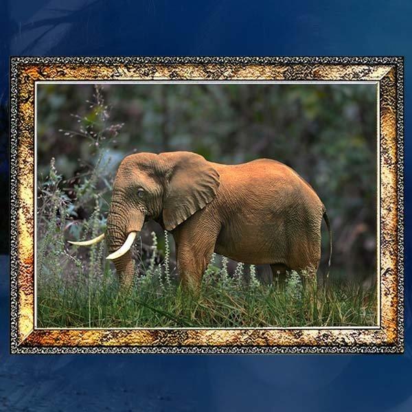 A315/코끼리액자/코끼리그림/코끼리사진/벽걸이액자 상품이미지