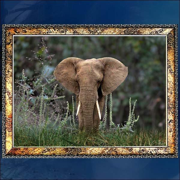A316/코끼리액자/코끼리그림/코끼리사진/벽걸이액자 상품이미지