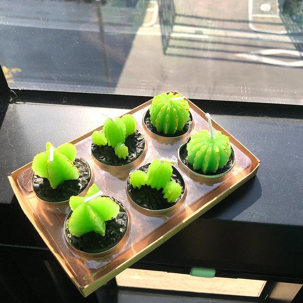 루이송 로코코 미니 선인장 캔들6피스 세트 양초 초 상품이미지