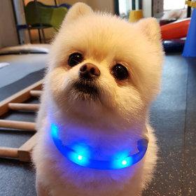 견심 애견야간목줄 LED목줄 안전목줄 강아지목줄 블루