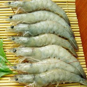 화이트 새우 20미 500g 무료배송