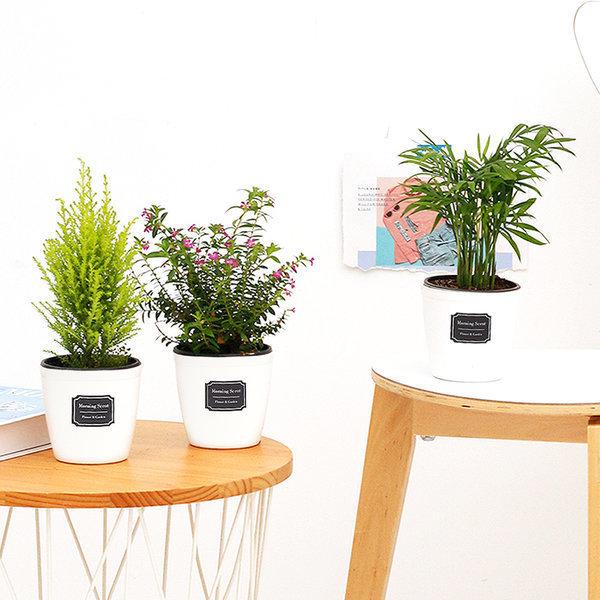 아침향기 공기정화식물 82종 초특가할인 관엽식물화분 상품이미지