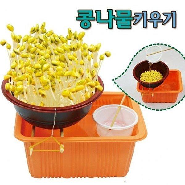 콩나물키우기(가습기) 1인용 콩나물기르기 콩나물재 상품이미지