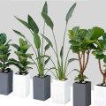 공기정화식물 대형식물 대형화분 극락조 아레카야자