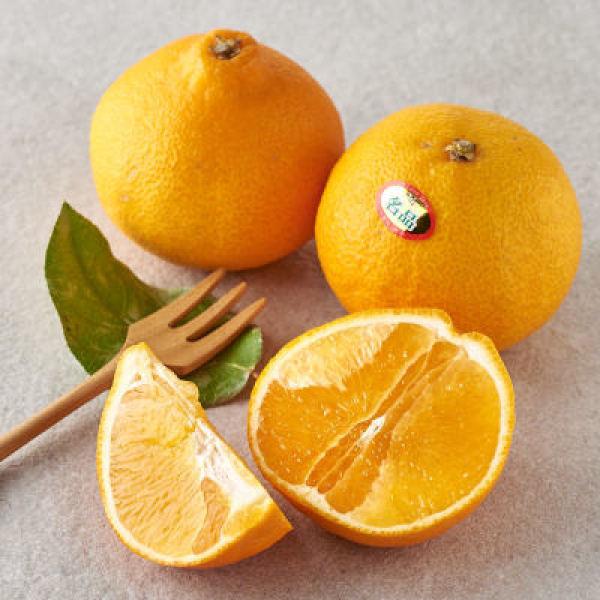 오렌지 기획(12입/팩) 상품이미지