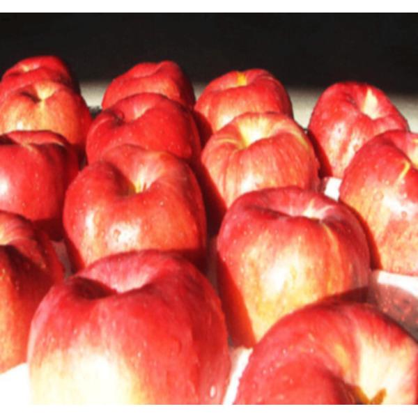 정원농산 껍찔째먹는사과 10kg마른기스(24과~34내외) 상품이미지