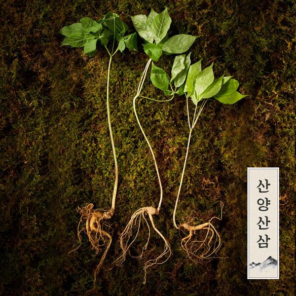 (현대Hmall)강원도 토종 정품 산양삼/산양산삼/장뇌삼 10년근이상 (4뿌리) 상품이미지