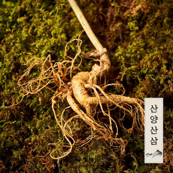 (현대Hmall)강원도 토종 정품 산양삼/산양산삼/장뇌삼 5-6년근 (6뿌리) 상품이미지