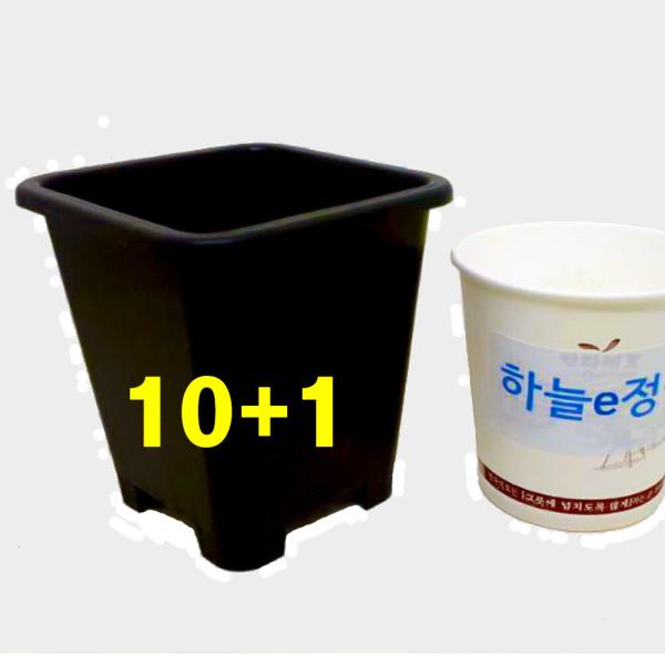 8.5cm플분1.5호 2개 원예용플분 플라스틱화분 상품이미지