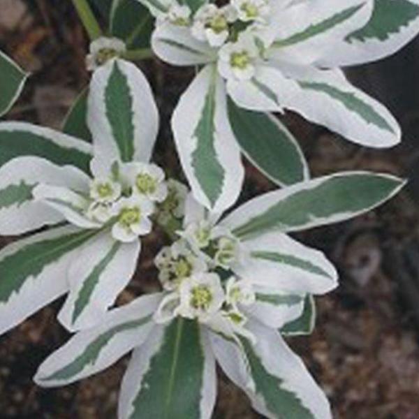 크리스탈 3D 입체 퍼즐 스누피하우스(Snoopyhouse) 상품이미지