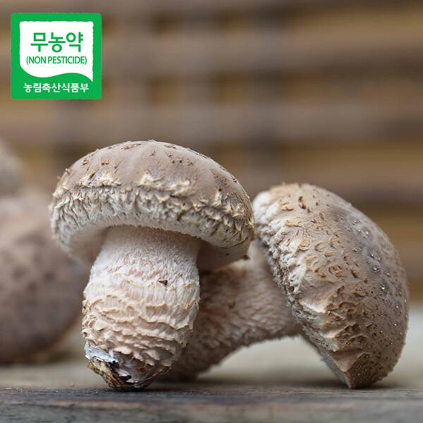 (현대Hmall) 생산자직송  충북 청주 임은영님의 광천수로 키운 무농약 송화고버섯 실속형(1kg) 상품이미지