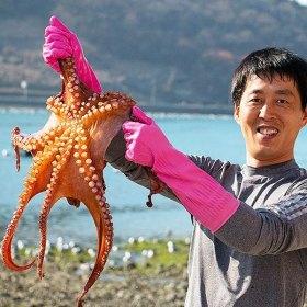 통영 자연산 돌문어 (생물) 1kg