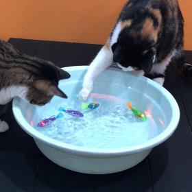 고양이장난감 로봇물고기 물고기장난감 레이져장난감