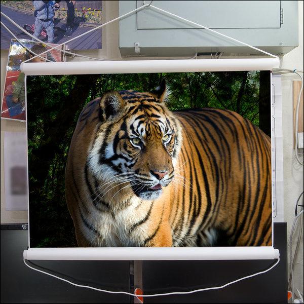 C508-1/호랑이/호랑이그림/호랑이사진/풍경사진 상품이미지