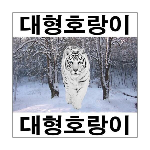 C505-1/호랑이/호랑이그림/호랑이사진/인테리어소품 상품이미지