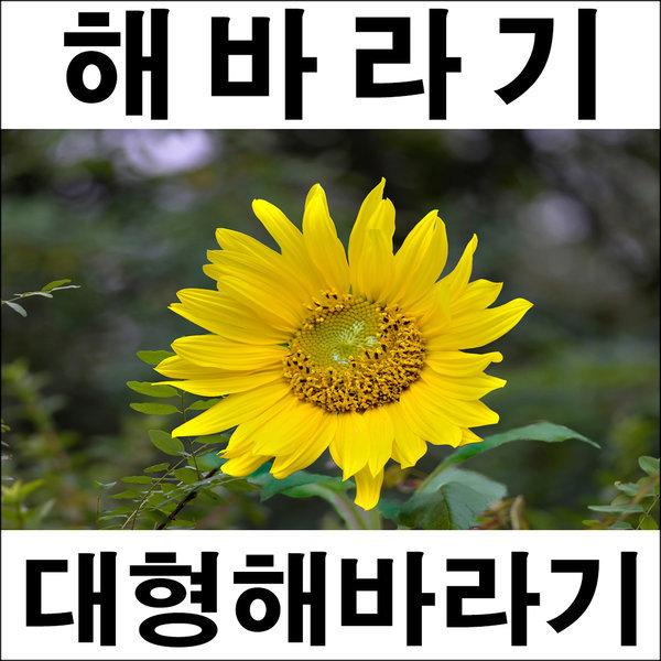 A278-2/해바라기그림/해바라기액자/해바라기유화/풍경 상품이미지