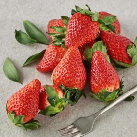 딸기(특/1KG)