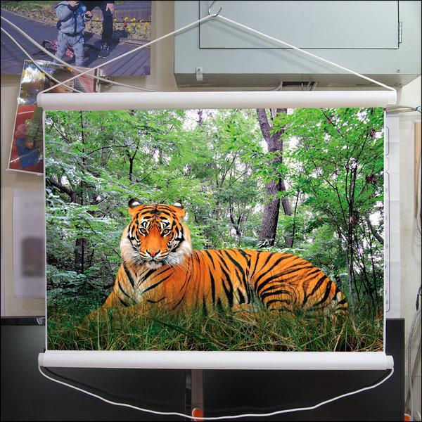 C045-1/호랑이/호랑이그림/호랑이사진/풍경사진 상품이미지