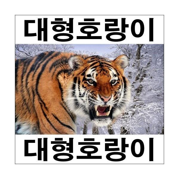 E177-1/호랑이/호랑이그림/호랑이사진/인테리어소품 상품이미지