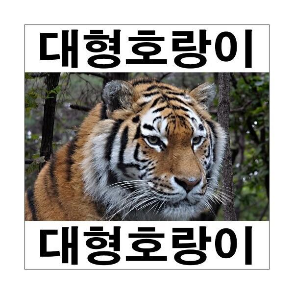 A282-1/호랑이/호랑이그림/호랑이사진/인테리어소품 상품이미지