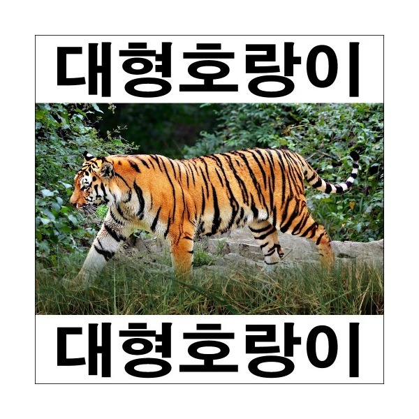 A288-1/호랑이/호랑이그림/호랑이사진/인테리어소품 상품이미지