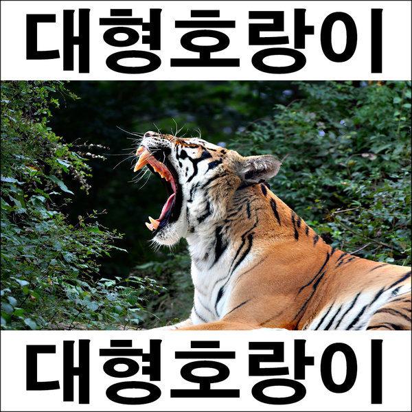 A298-1/호랑이/호랑이그림/호랑이사진/인테리어소품 상품이미지