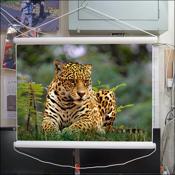 A272-2/표범/호랑이/호랑이그림/호랑이사진/풍경사진 상품이미지