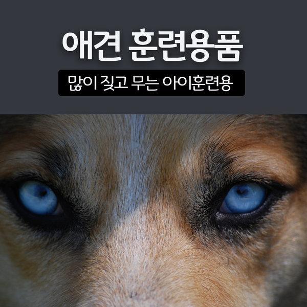 강아지 짖음방지기/애견용품/애견훈련용품 상품이미지