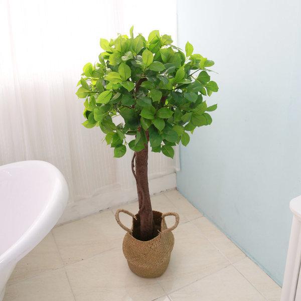 인조나무 토피어리 몬스테라 인조목  베이토피어리1단 상품이미지