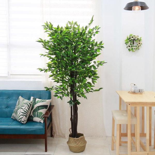인조나무 조화나무 몬스테라 프랑스벤자민트리 180cm 상품이미지
