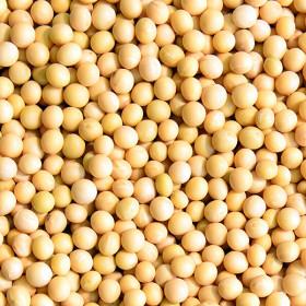 국산 백태 2kg 2020년산 햇곡