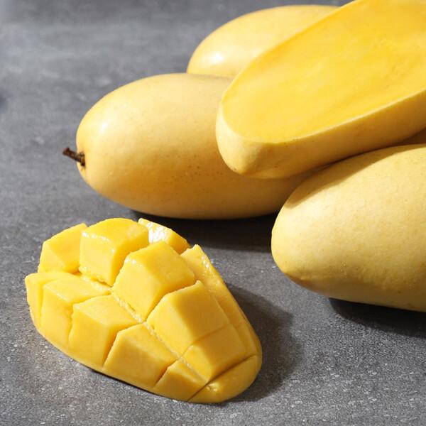 (현대Hmall) 후레쉬망고 열대과일의 여왕 필리핀 후레쉬 망고 1.25kg(6과) 상품이미지