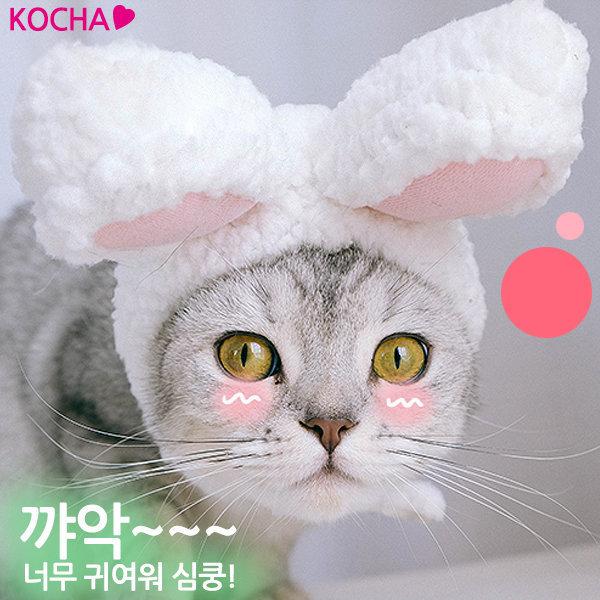 KOCHA 반려동물 토끼 모자 고양이 강아지 펫 홍이네 상품이미지