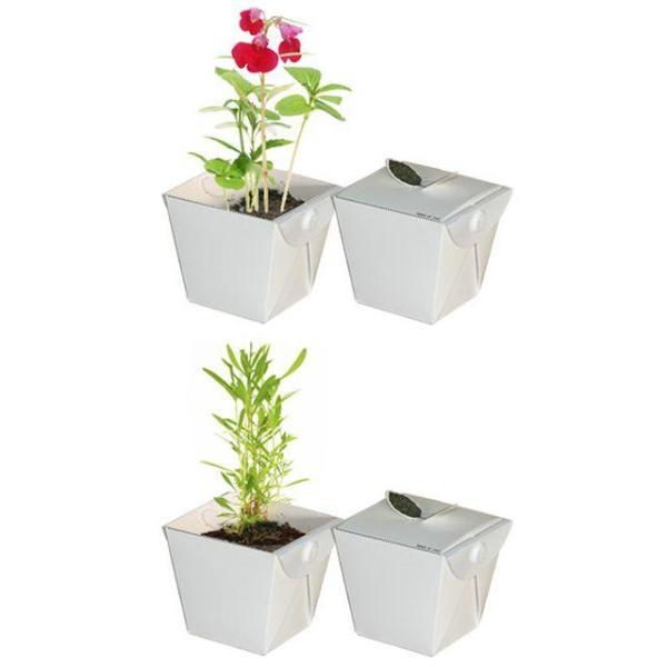 키우기쉬운식물 식물재배 학습관찰용 세트 상품이미지