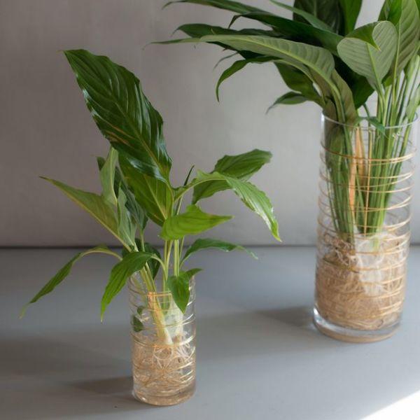 수경 식물 스파티필름 공기정화식물 세트 (S) 상품이미지