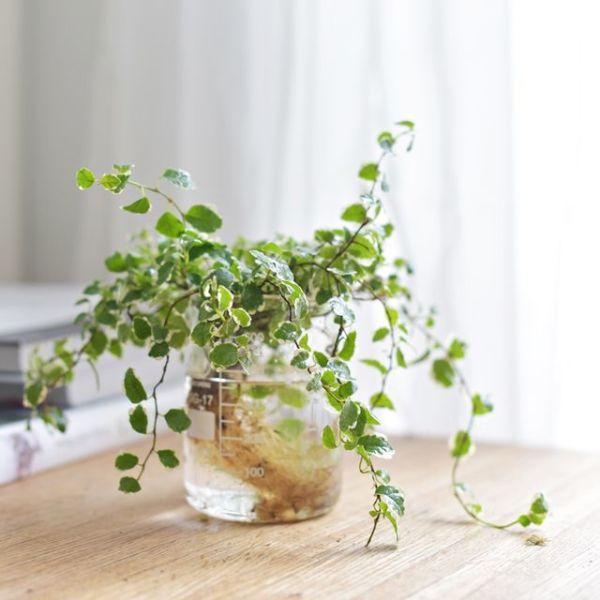 수경식물 푸밀라 비커 세트 상품이미지