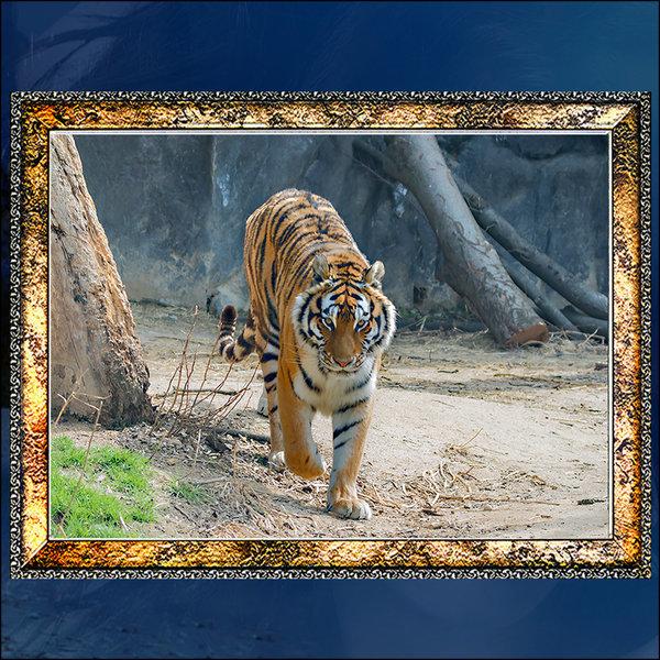 A683-3/호랑이/호랑이그림/호랑이사진/풍경사진 상품이미지