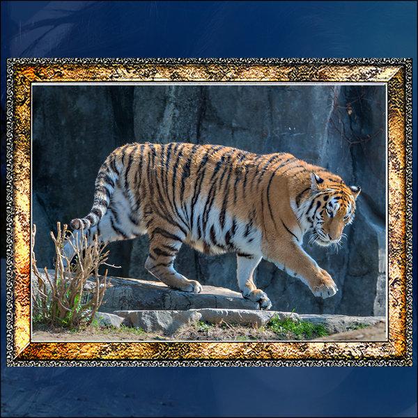 A684-3/호랑이/호랑이그림/호랑이사진/풍경사진 상품이미지