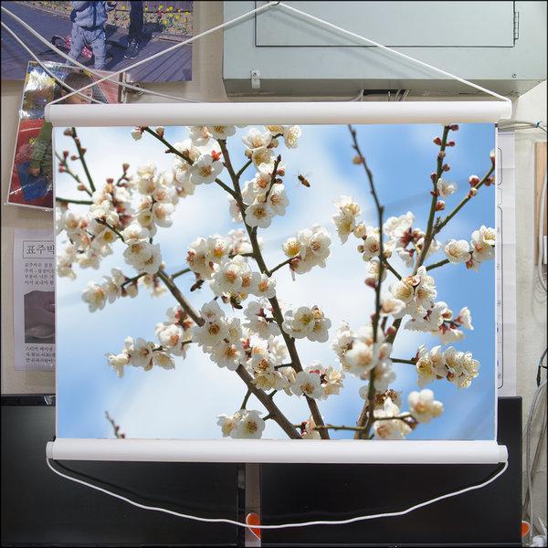 A296-2/벌사진/벚꽃사진/풍경화/족자/인테리어소품 상품이미지
