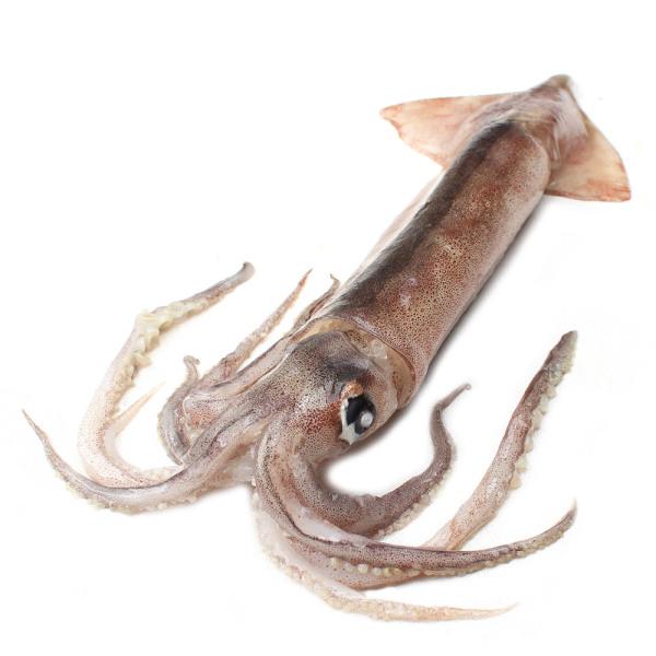 비비빅 총알오징어 수입산 선동오징어 1kg 7-9미 상품이미지