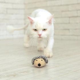 로얄펫 고양이 장난감 (알비노고슴이)